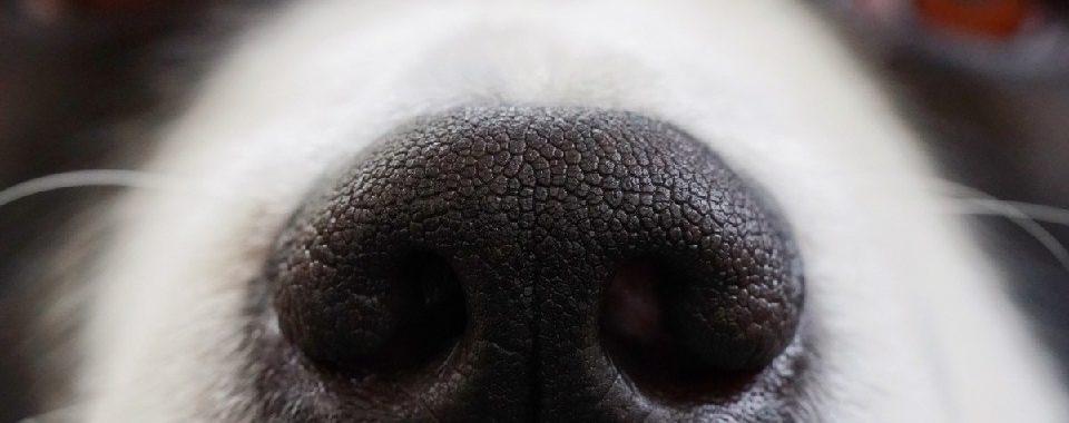 olfatto dei cani e prevenzione tumori