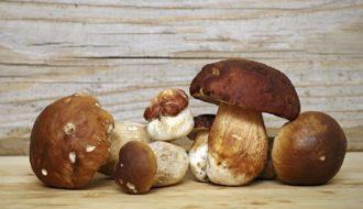 prevenzione cancro alla prostata e funghi